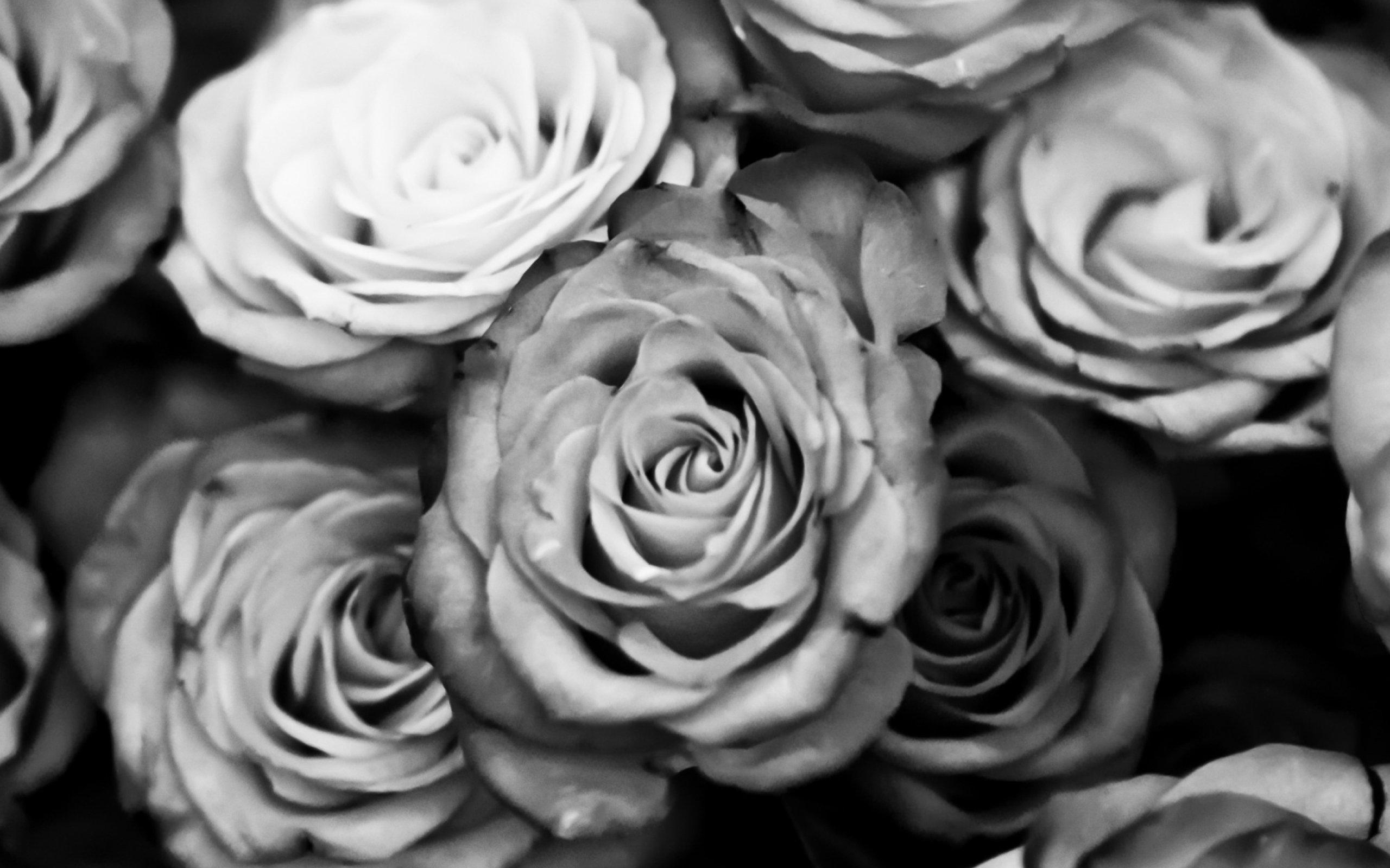Черно белые картинки в цвете