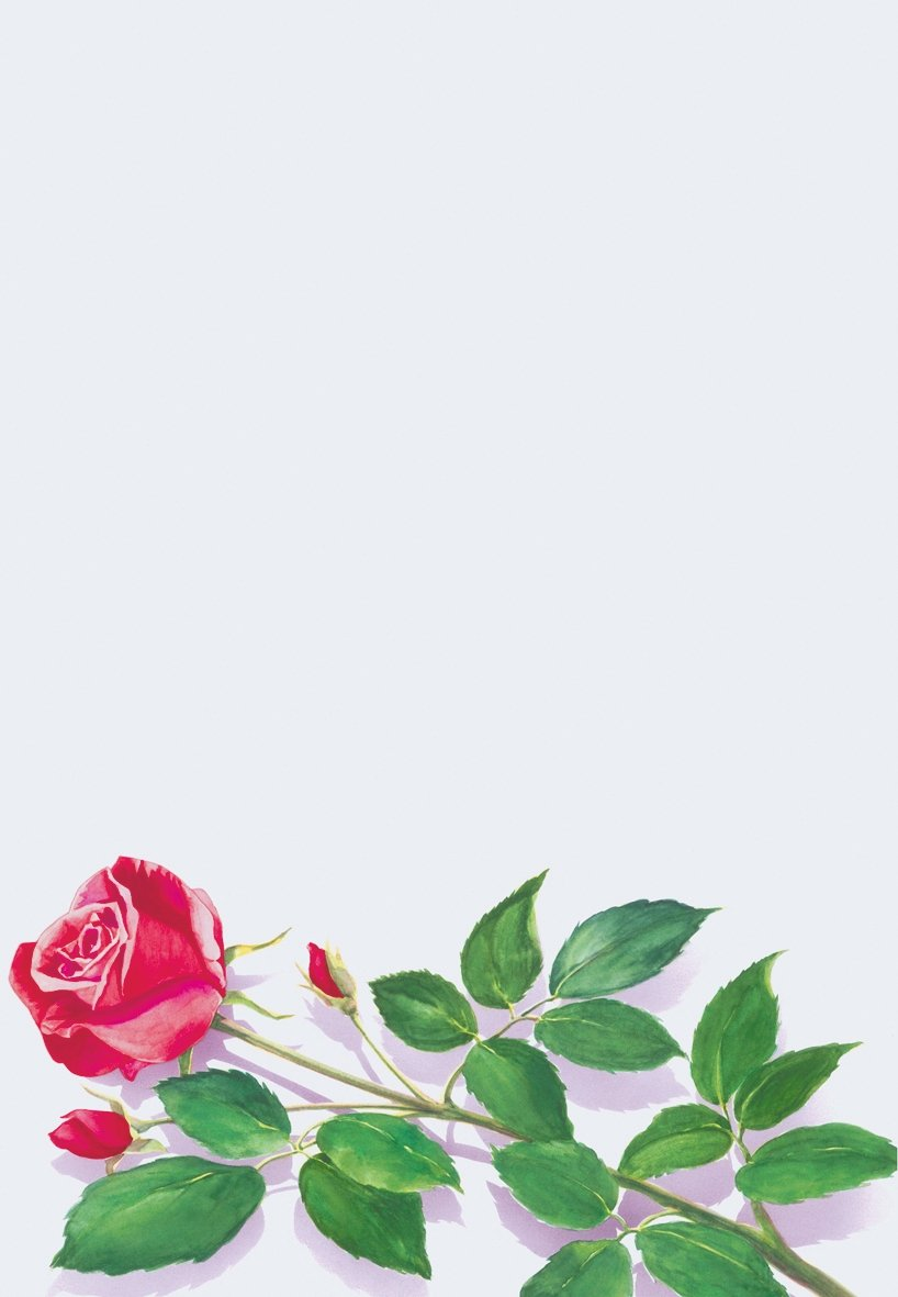 белый лист с цветами картинки предложение