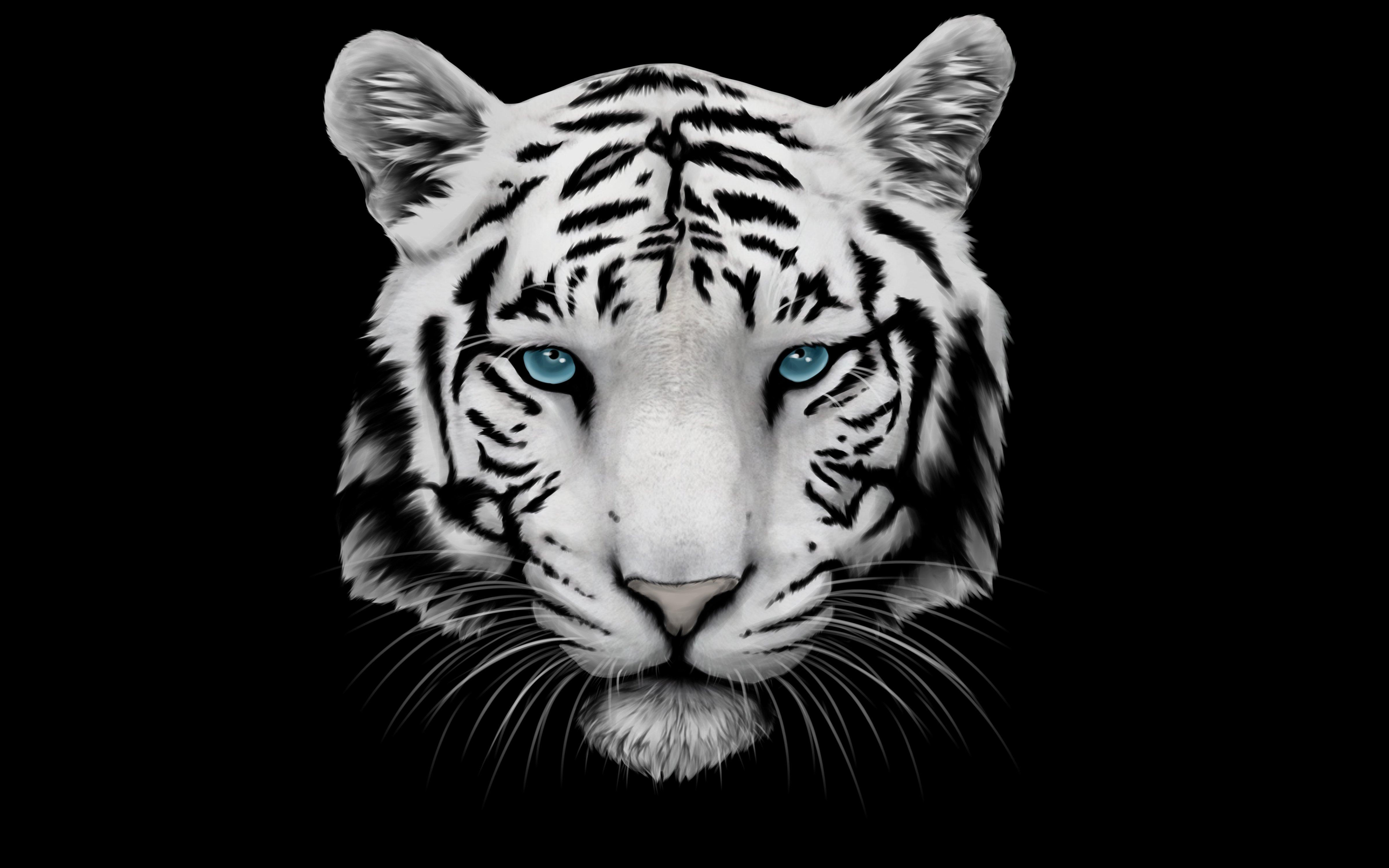 картинка тигренок на черном фоне декоративные виды своей