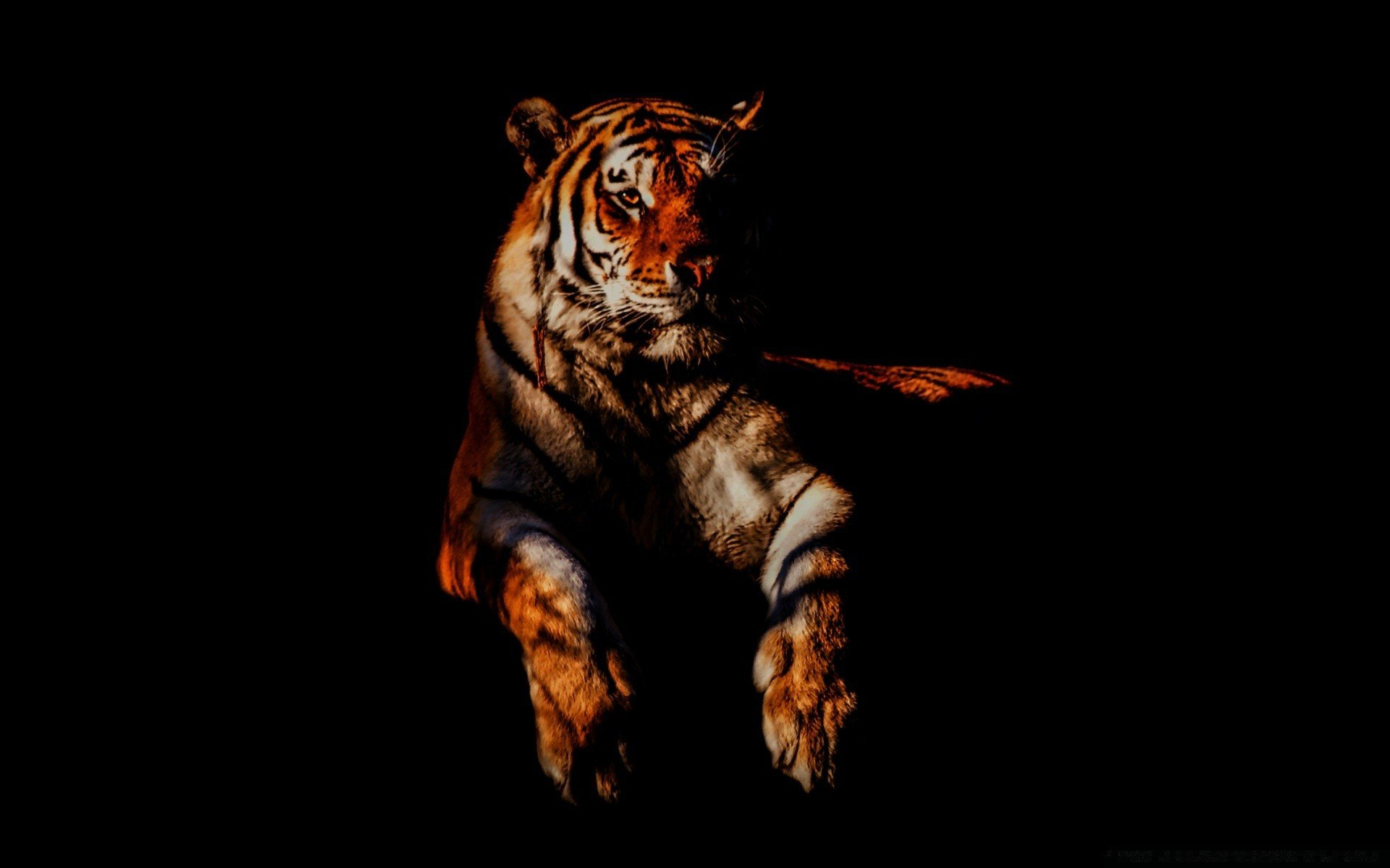 для картинка тигренок на черном фоне состояние