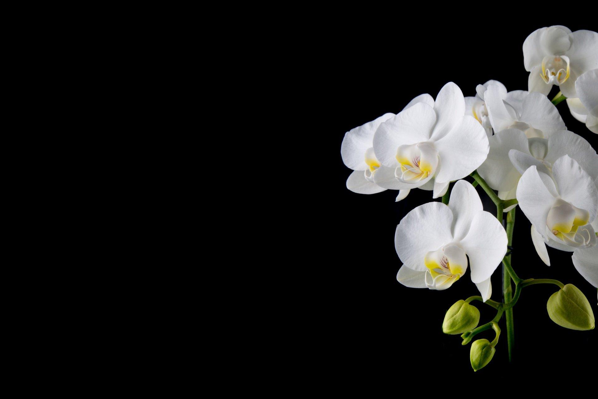словам картинка белой орхидеи на сером фоне картинке