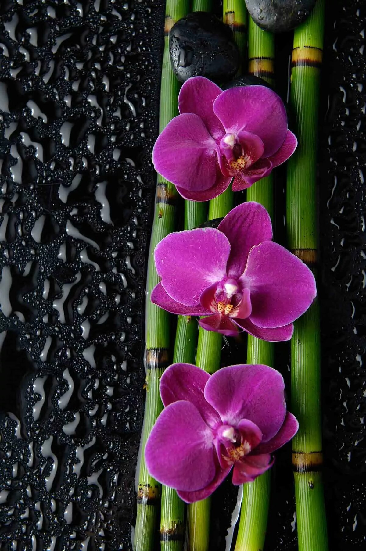 Орхидеи фото на телефон стрижек
