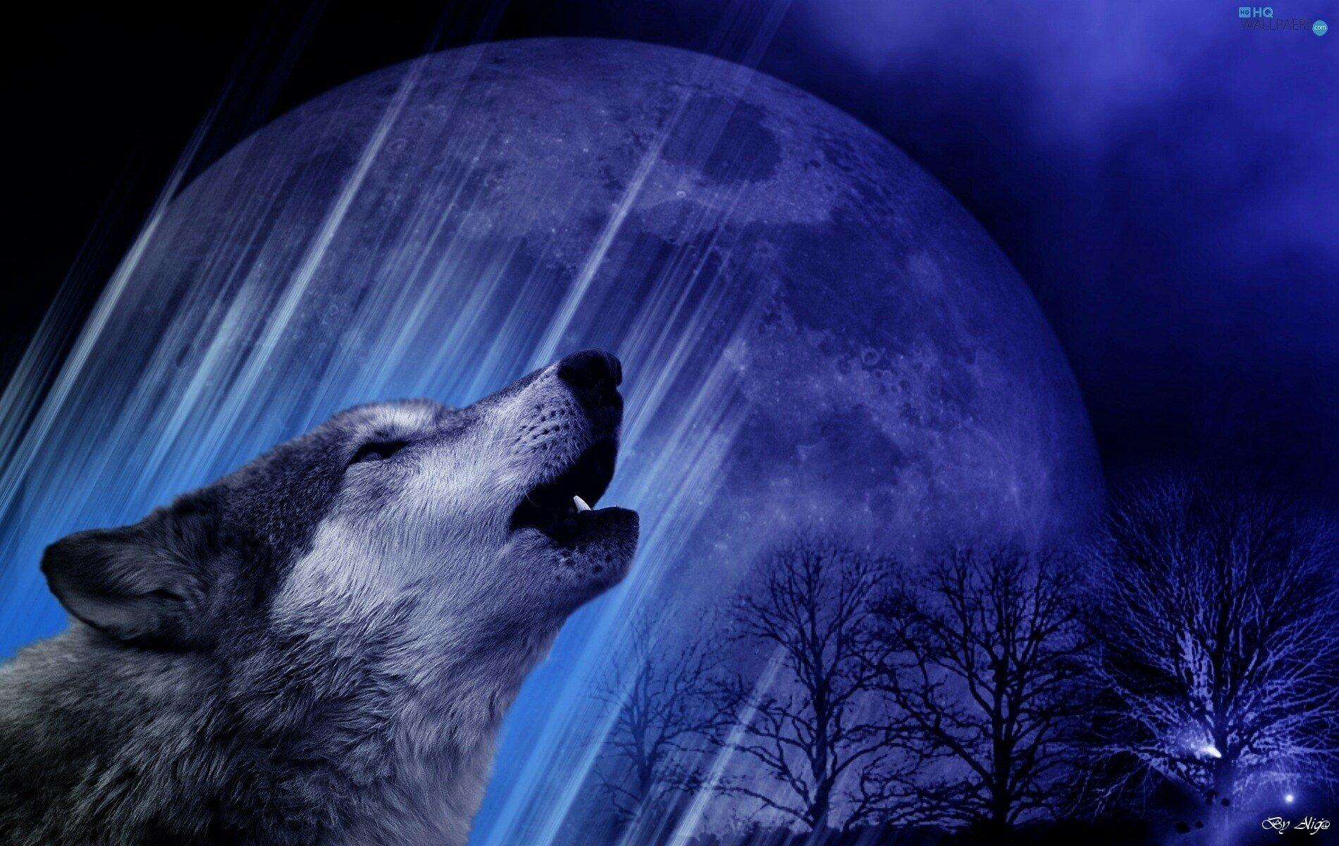 январе фото волка на фоне луны расстановки столов рассадки