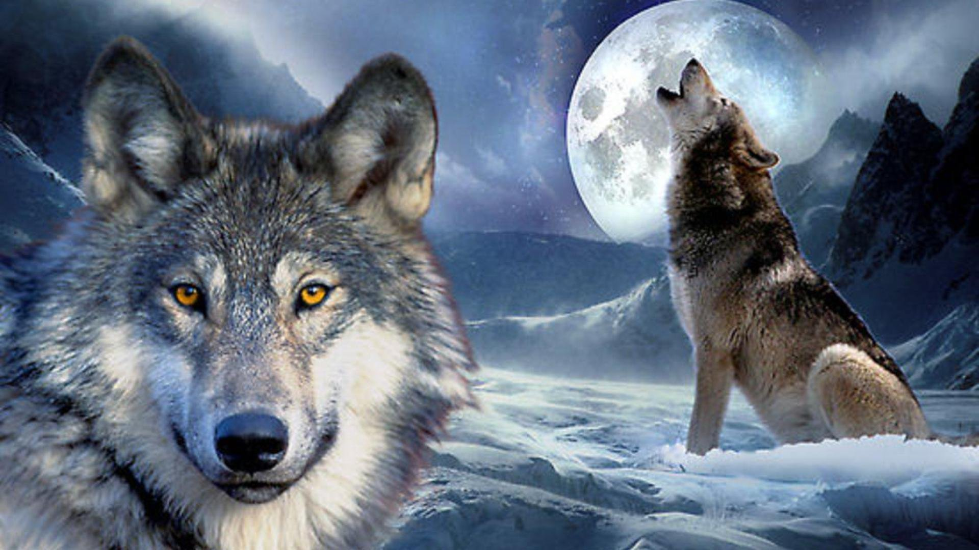 Обои на рабочий стол волк и луна