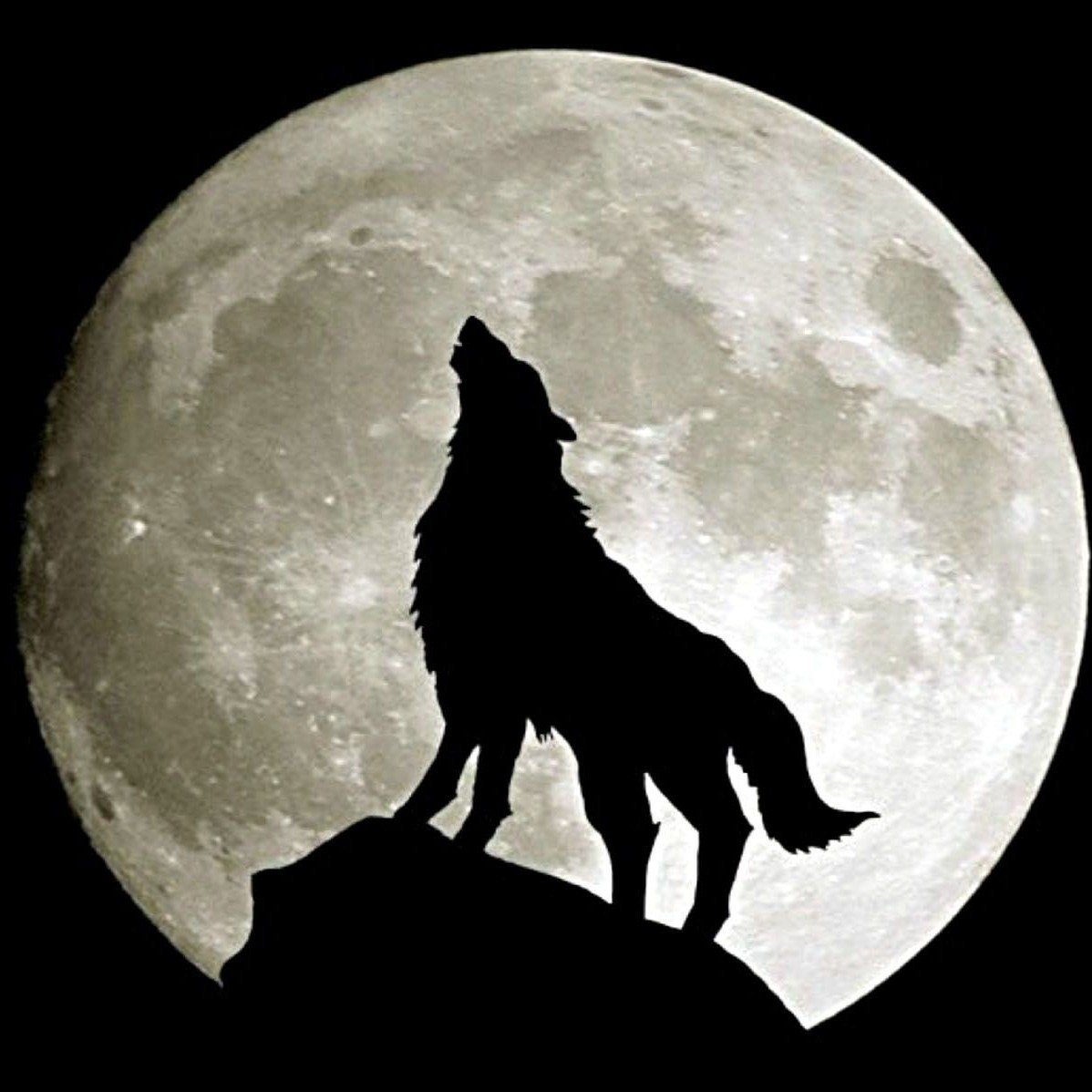 Картинка оборотень воющий на луну