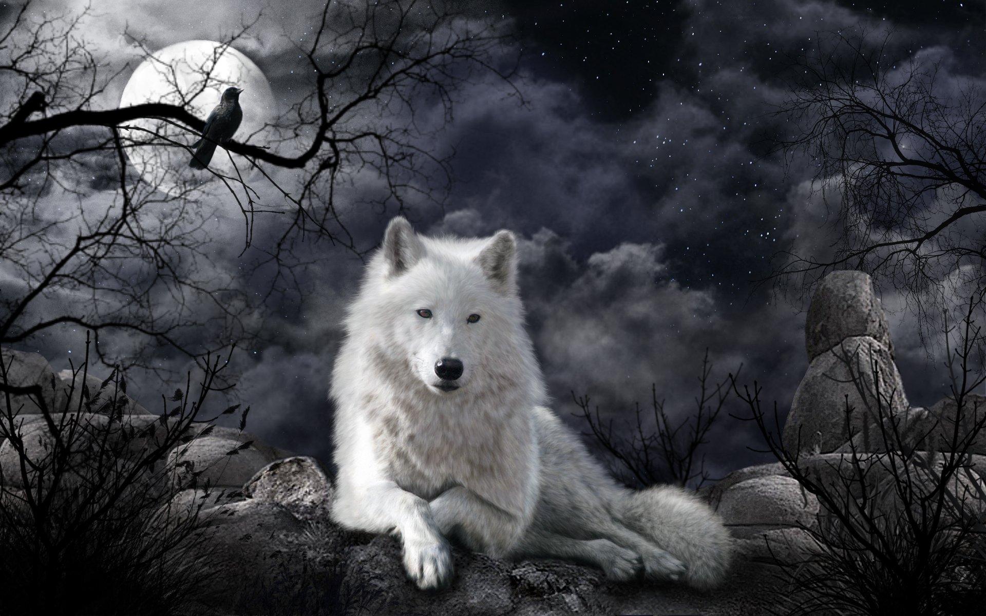 или фото волка на фоне луны открытка