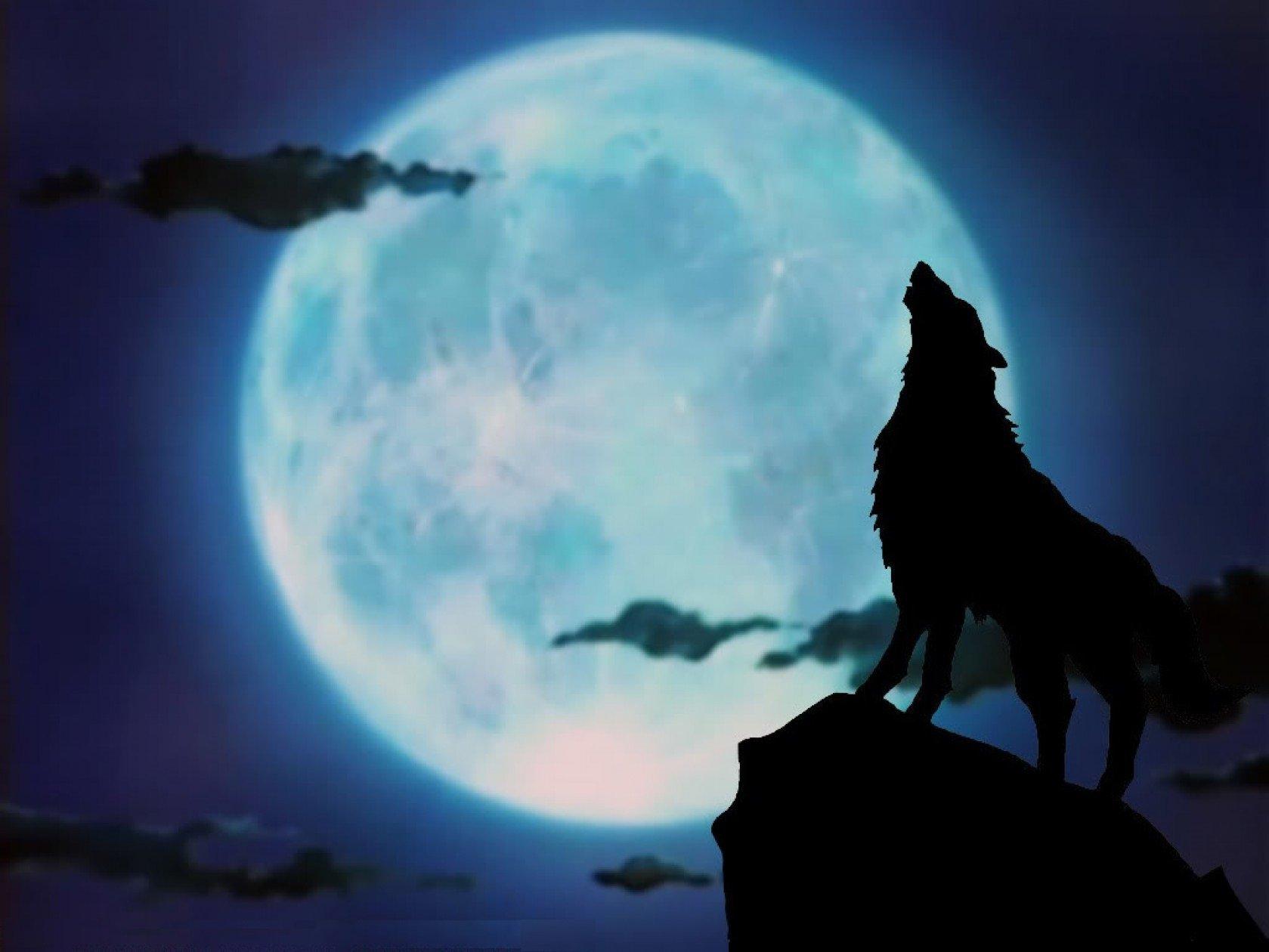 лучше картинка волк воет на луну сидя китайская