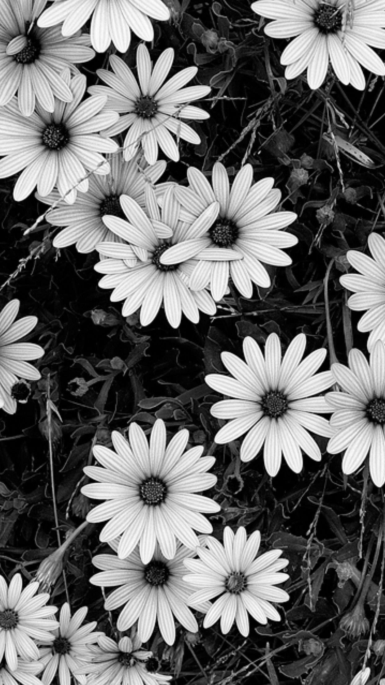 Черно белые картинки для фона телефона