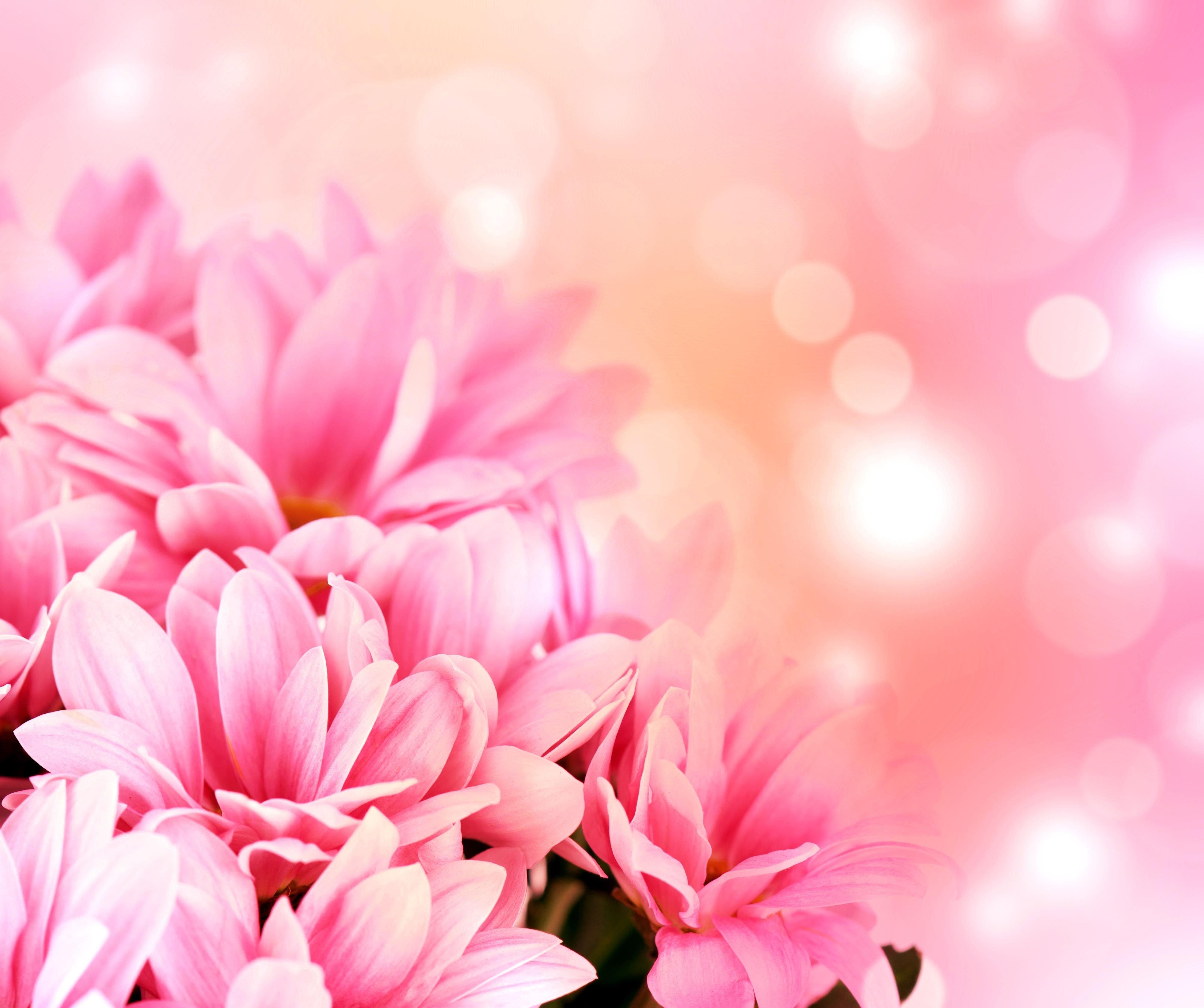 цветы для поздравительной открытки это растение нельзя