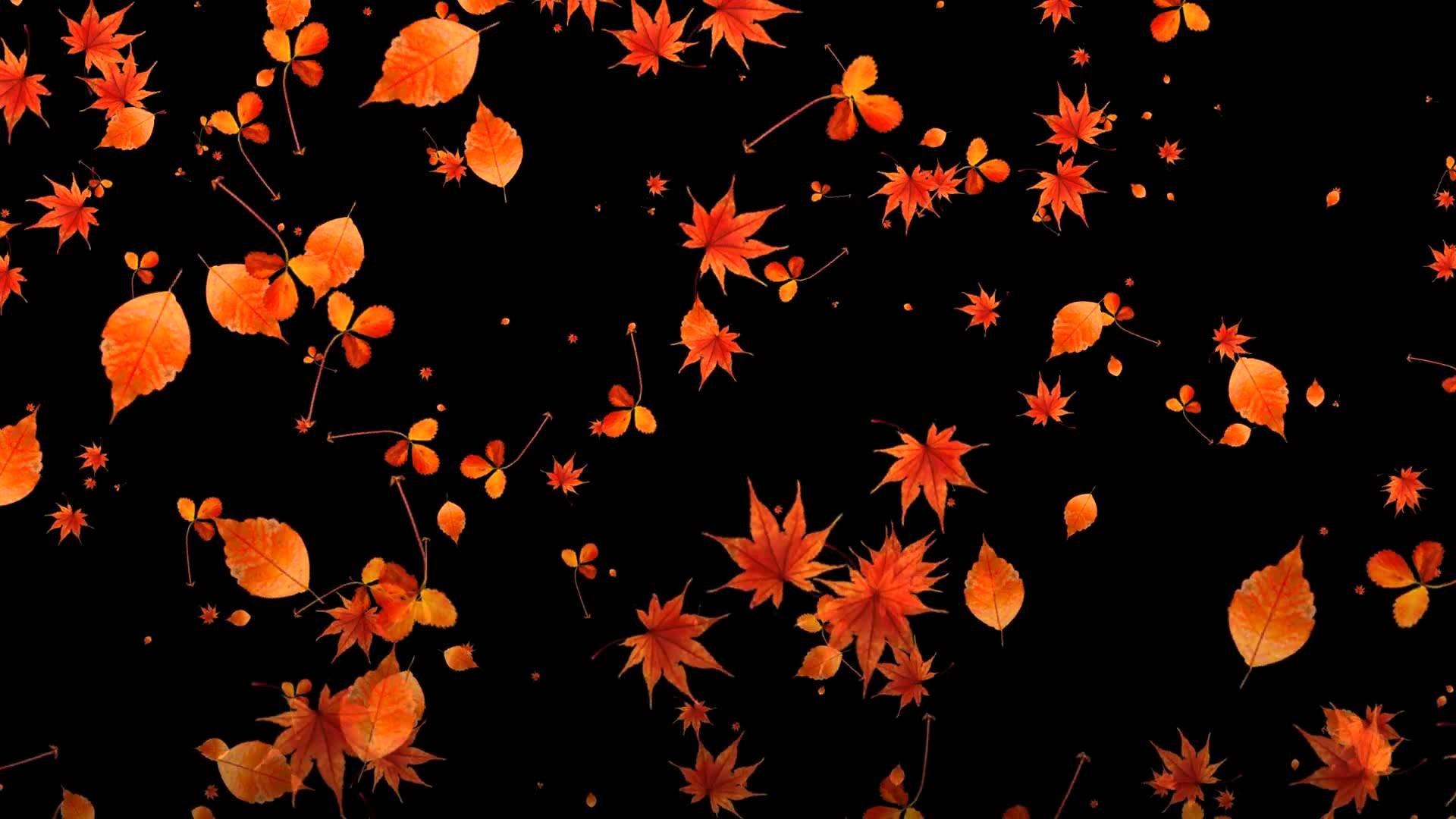 гифы падающие листья война