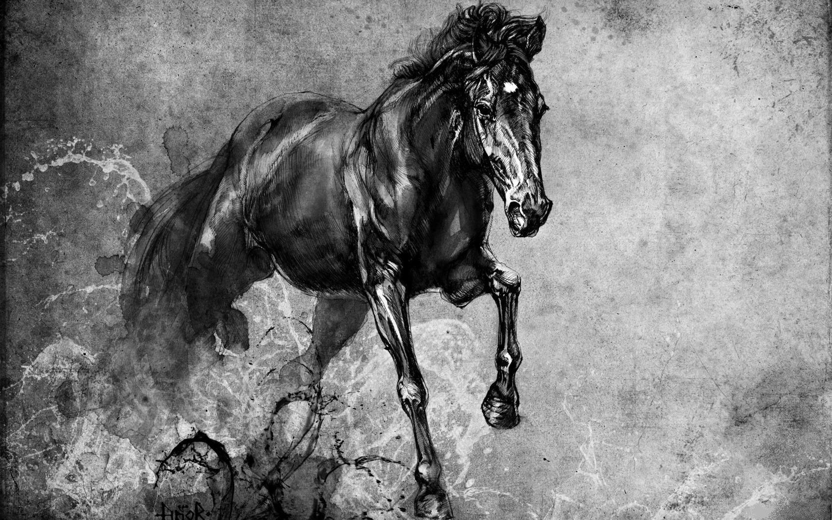фото коня графика борьбы жуками дачных