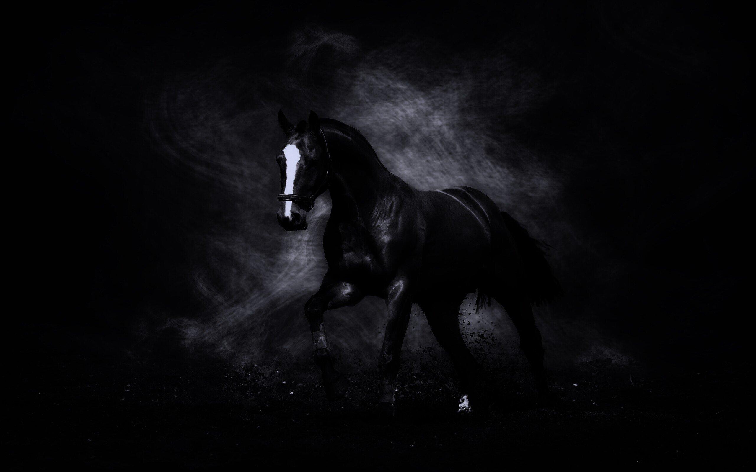 Лошадь на темном фоне картинки