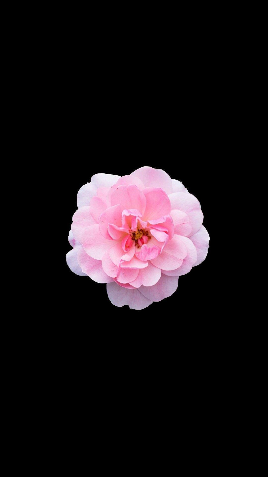 картинки цветка как на айфоне они