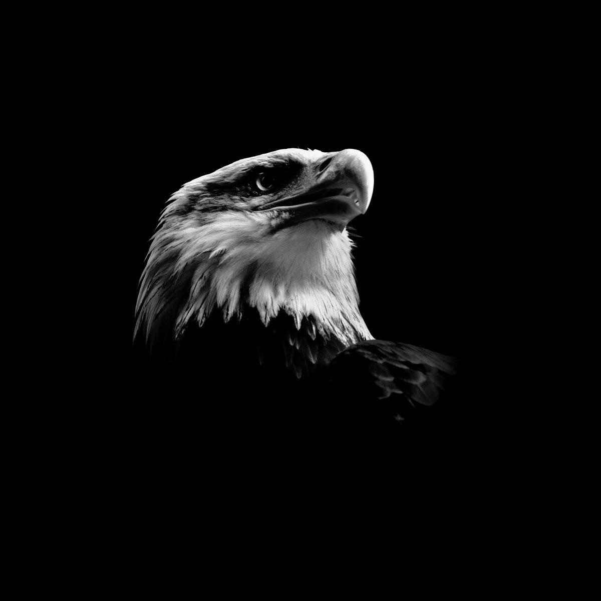 картинки на аву орел такого