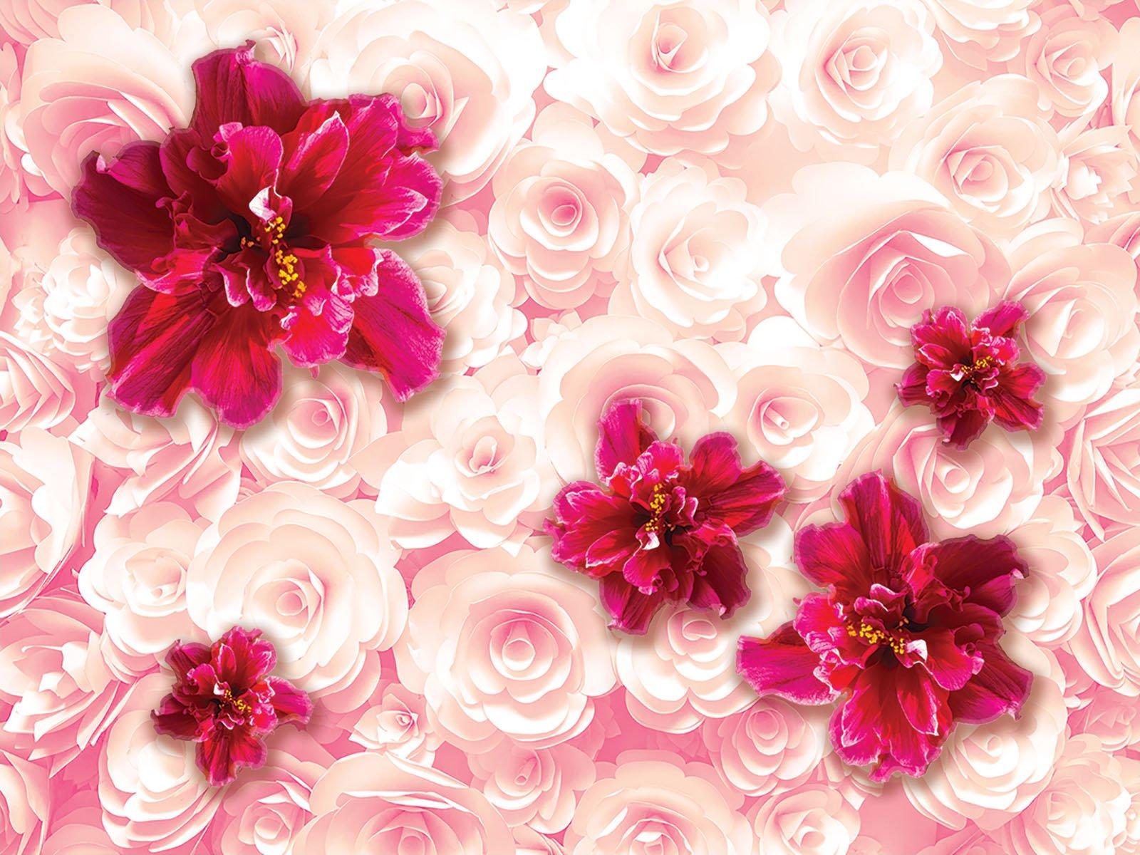 Картинки цветы розовые фон