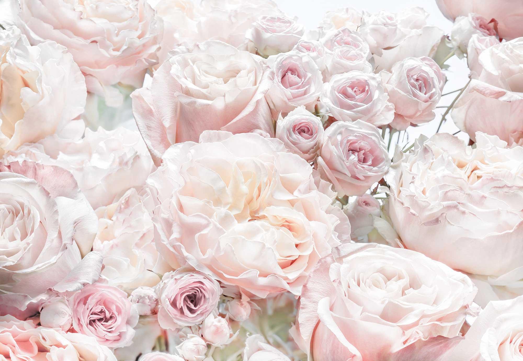 проходил красивые цветы картинки и фотообои только самое