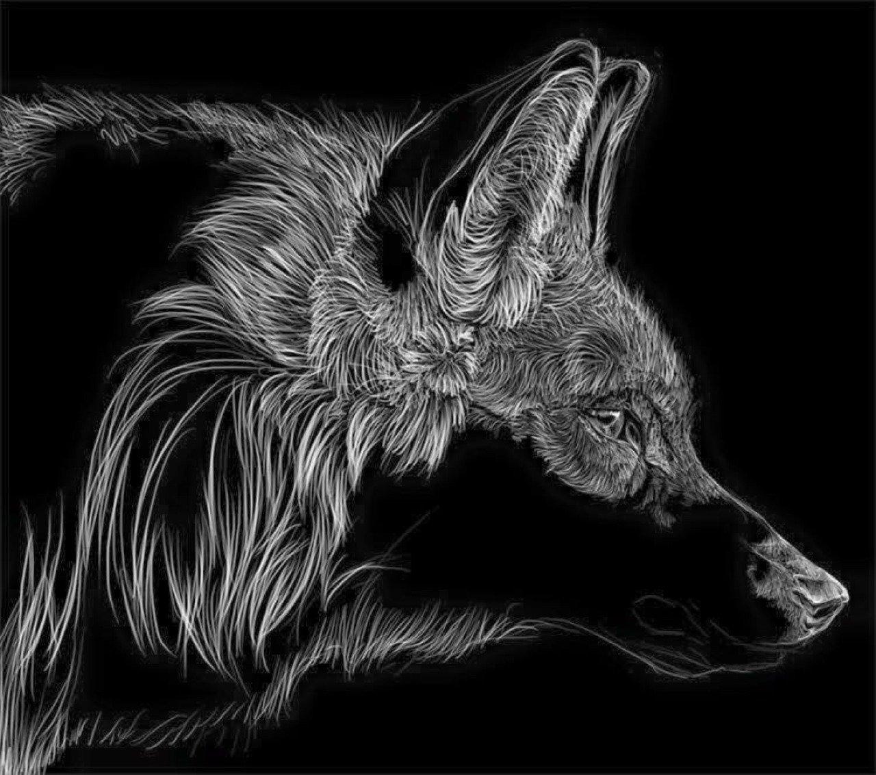Черно-белый волк картинки