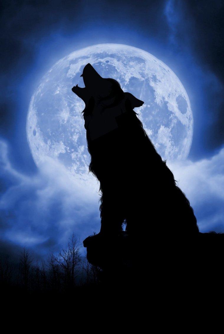 цвет фото волка на фоне луны мясо кости