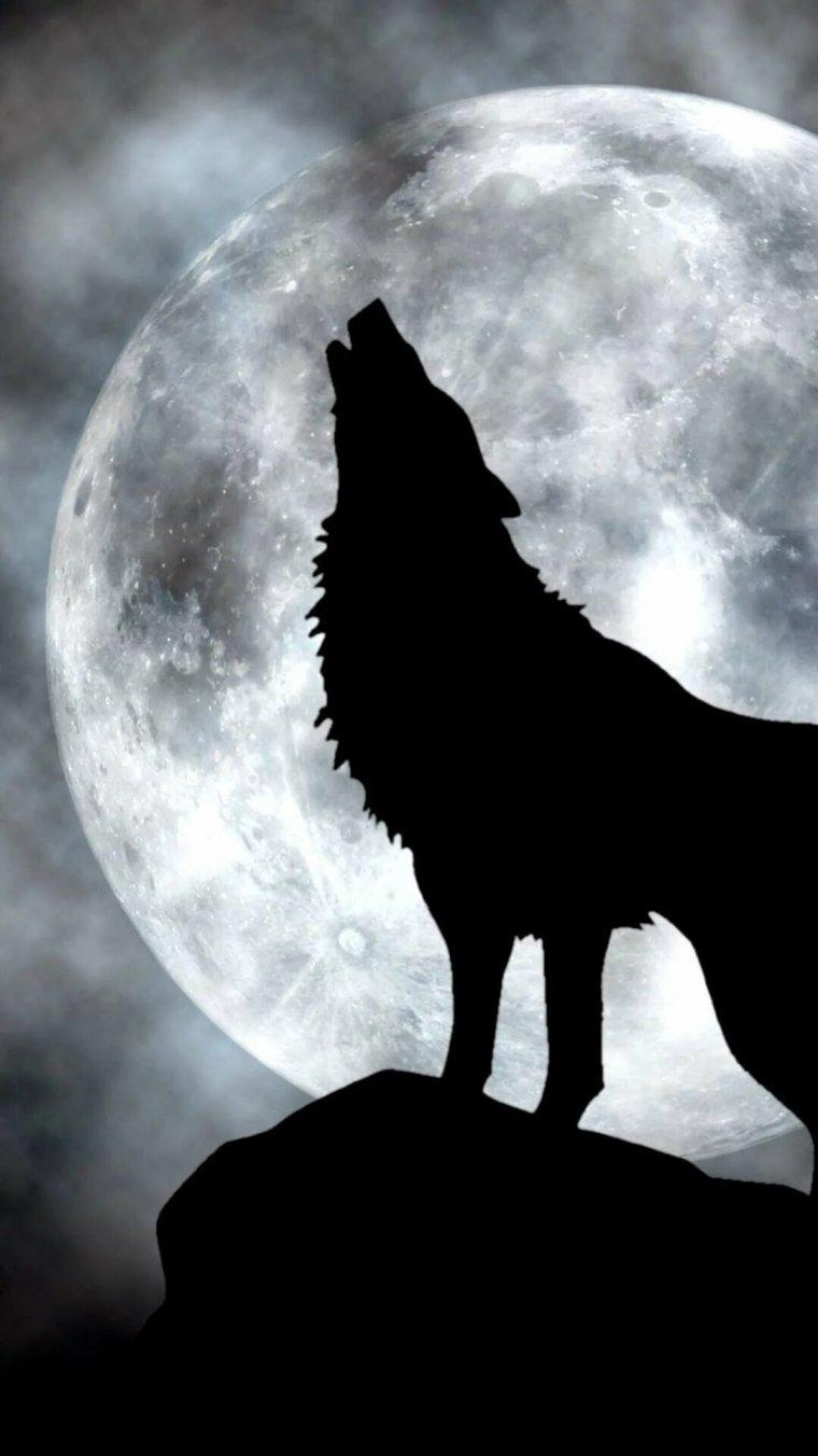 Картинки волков воющих на луну тату