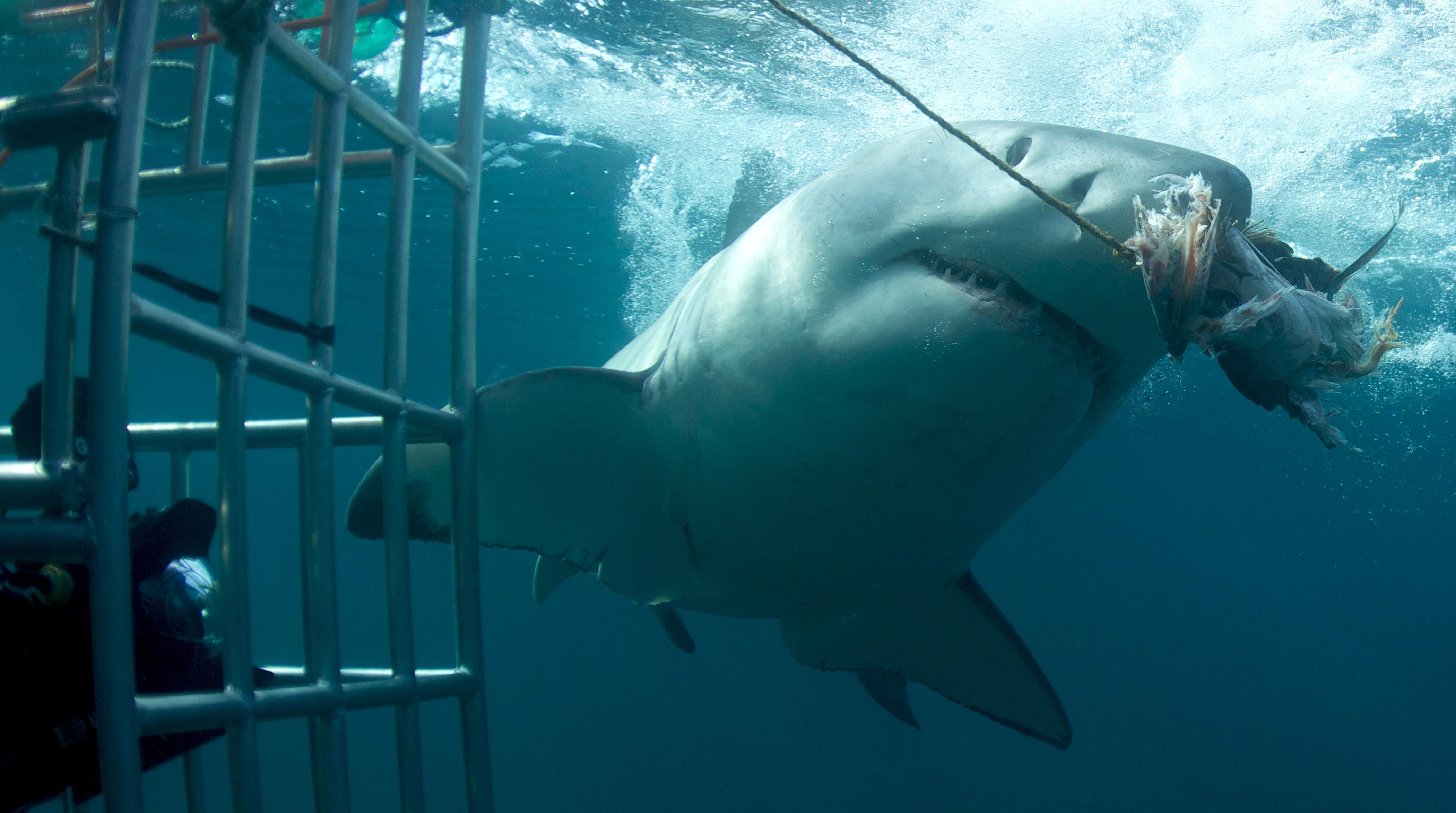 том, кино про акул картинки фирмы фишер