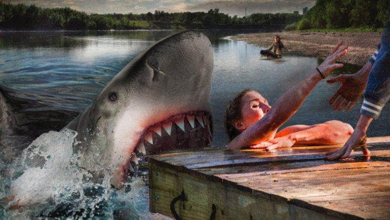 Акулы на свободе картинки