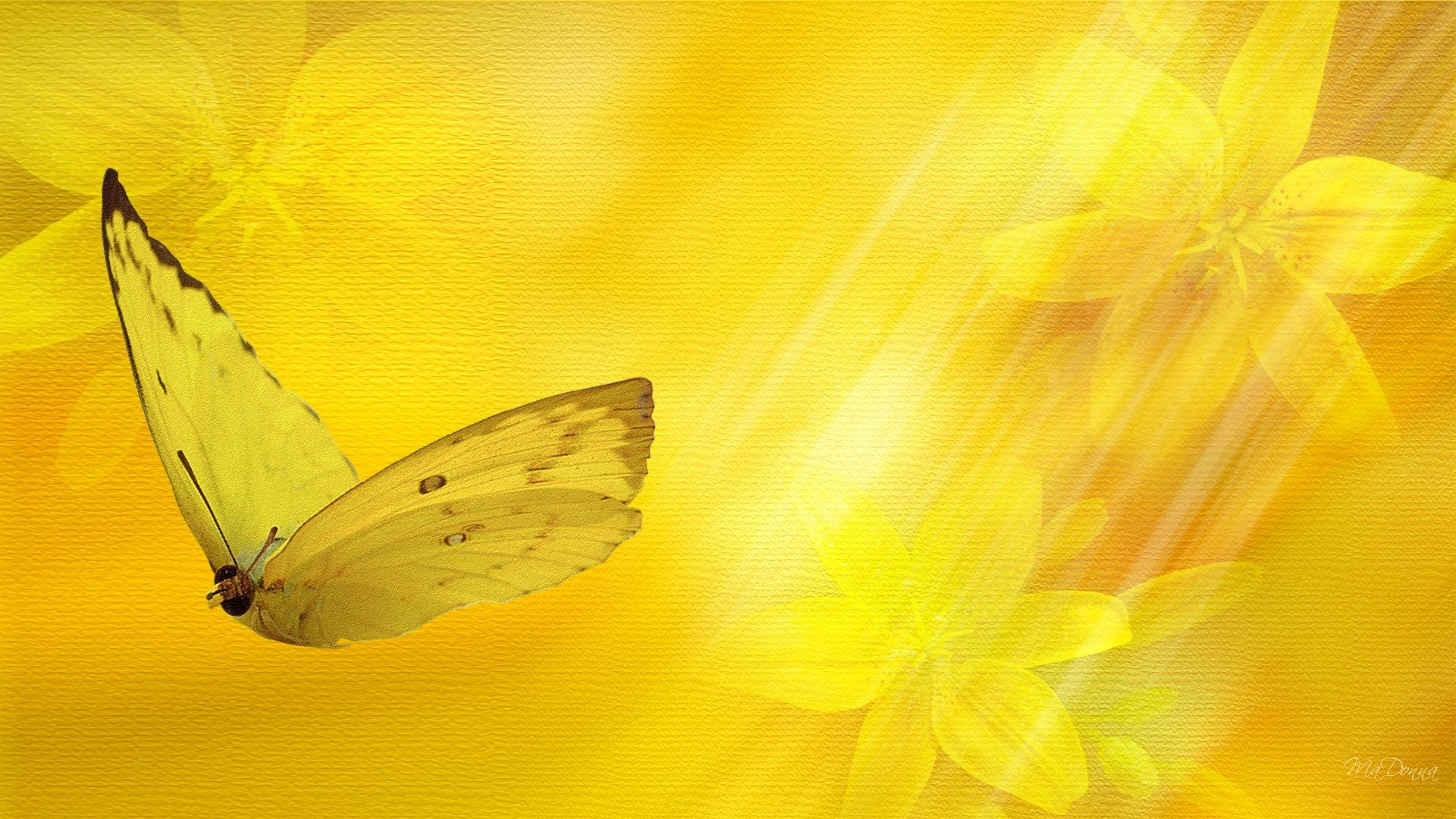 Картинки с бабочками фон для презентации