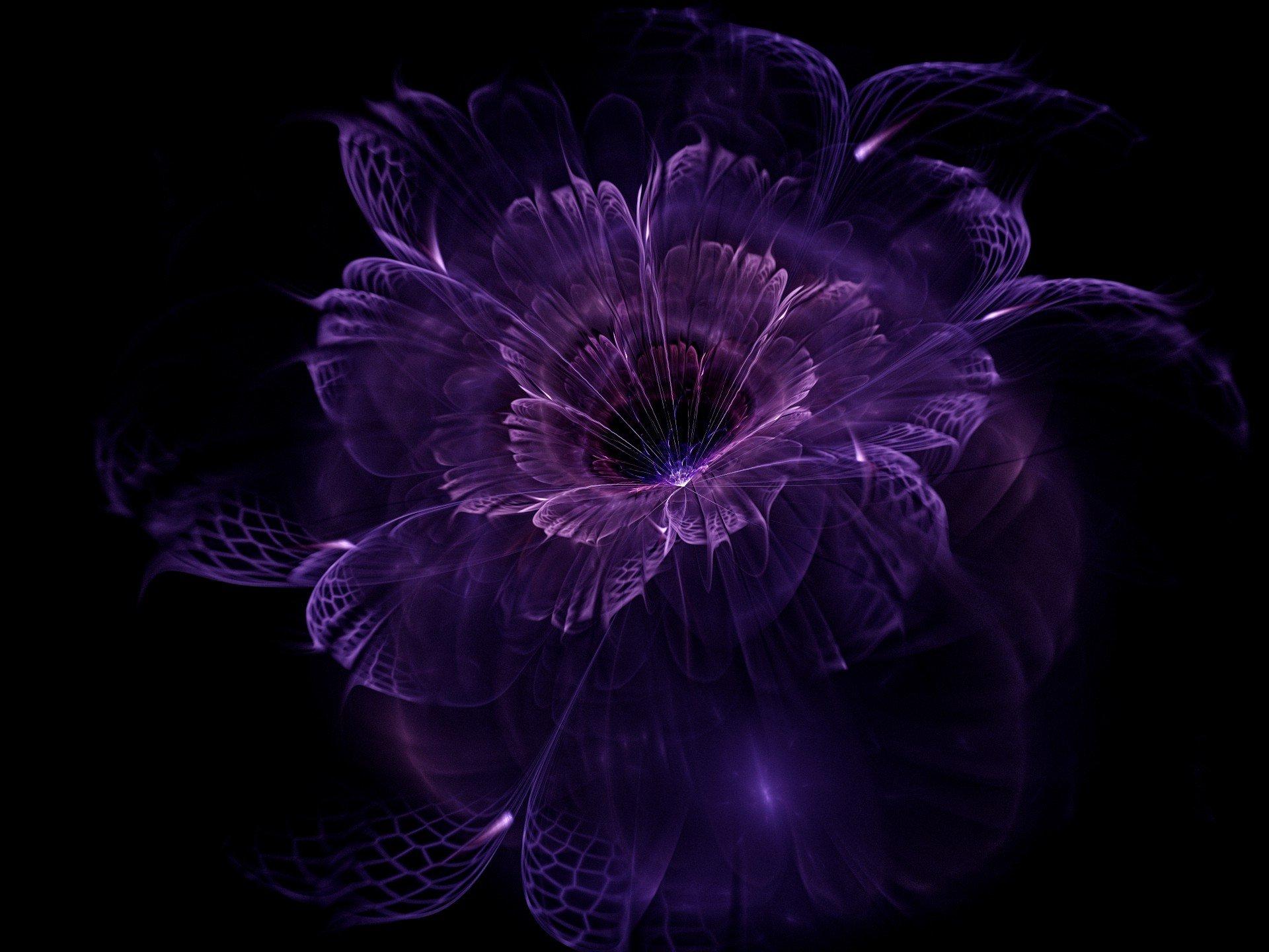 картинки на экран цветы на черном фоне хотя бытует